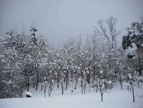 2010-2,13,炭焼き小屋・他雪 022.JPG