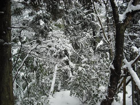 2010-2,13,炭焼き小屋・他雪 040.JPG