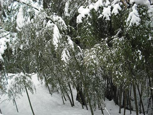 2010-2,13,炭焼き小屋・他雪 044.JPG