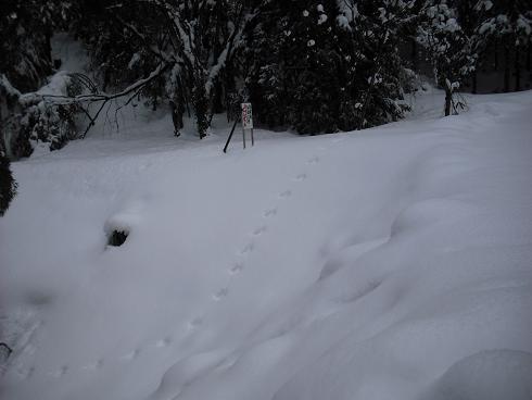 2010-2,13,炭焼き小屋・他雪 050.JPG