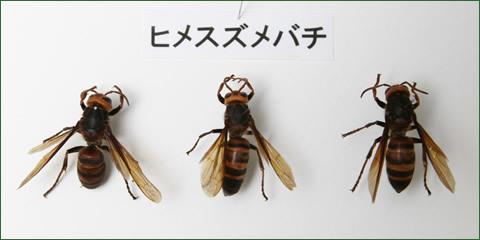 シロアリ屋からハチ屋へ ...