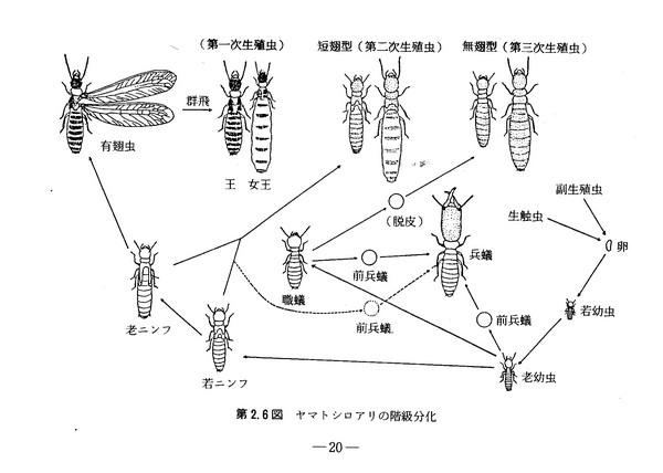 ニンフ 001 (2).jpg
