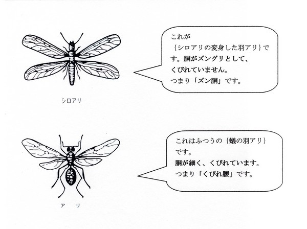 羽アリの区別.jpg
